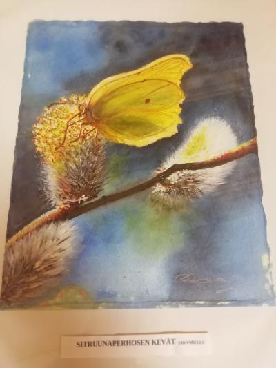 Sitruunaperhosen kevät -taulu
