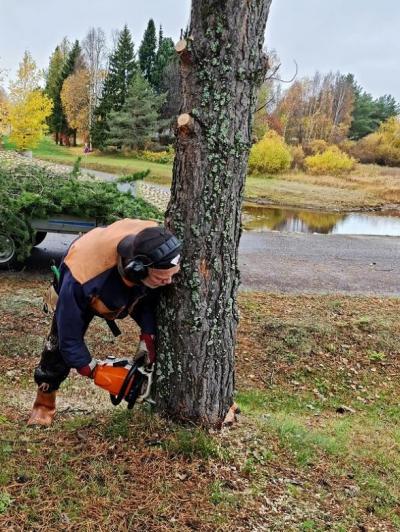 Puuta sahataan Eeronpuistossa